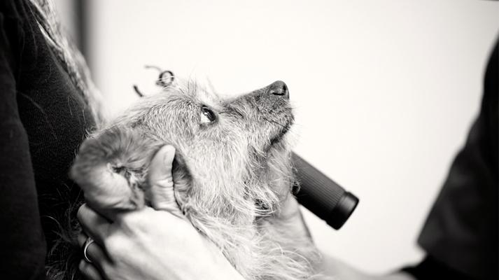 Taqueobronquitis infecciosa canina