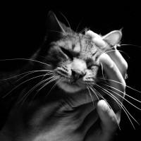 img-medicina-felina