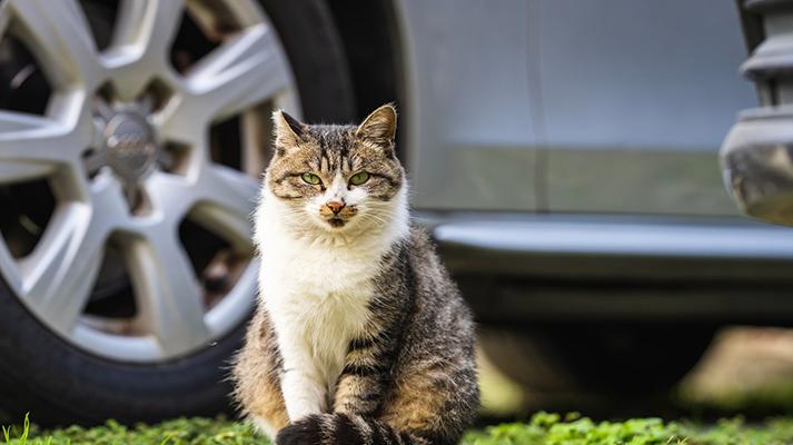 Ahuyentar gatos del coche