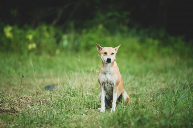 Alzheimer en perros o disfunción cognitiva