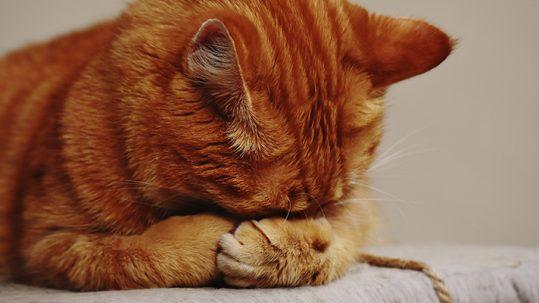 Síndrome de Inmunodeficiencia Felina