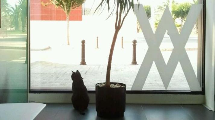 Gato en el interior de la clínica Innova veterinaria