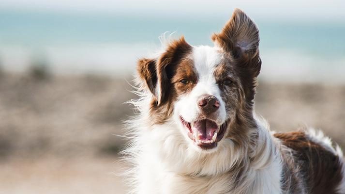 Plan de salud para perros