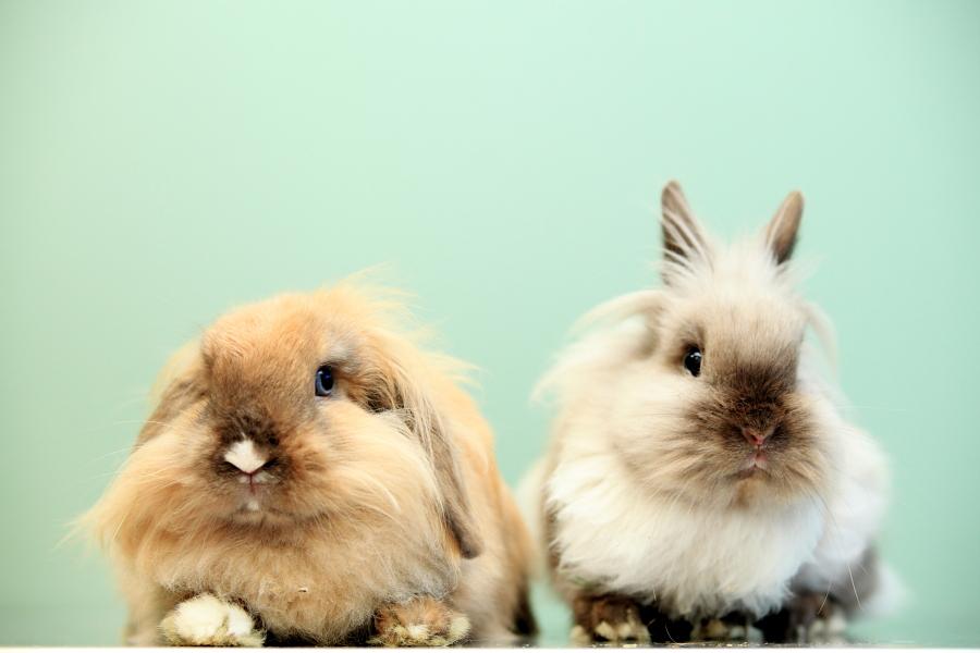 Imagen conejos - Innova Veterinaria