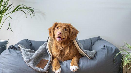 Medicina preventiva veterinaria