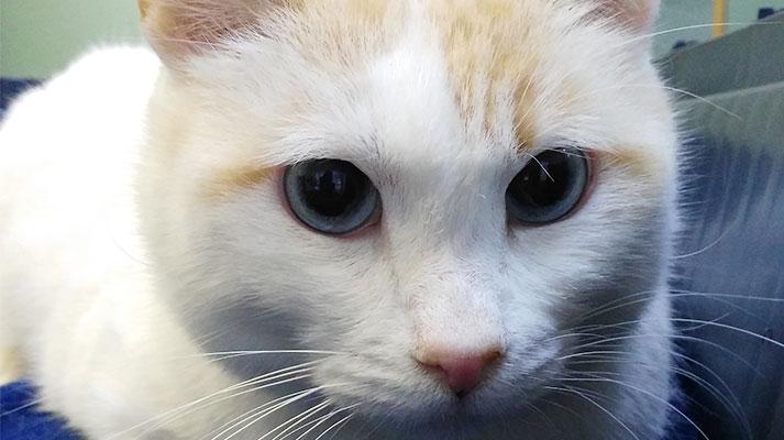 Problemas renales en gatos - Innova Veterinaria