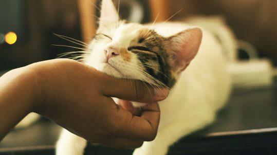 Consultas veterinarias frecuentes