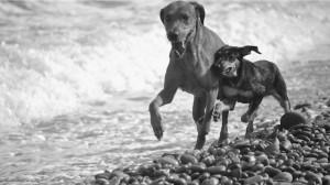 perros-en-la-playa