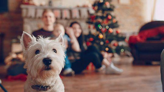 Cuidar a las mascotas en Navidad