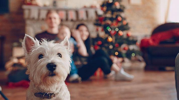 Cuidar a las mascotas en Navidad consejo de Innova veterinaria