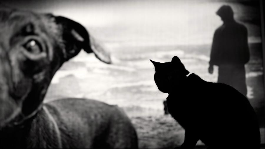 Esterilización en perros y gatos