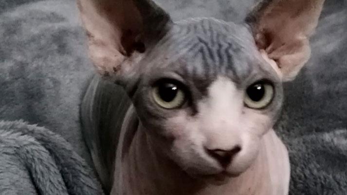 Diarrea en gatos,caso de moura en inova veterinarios