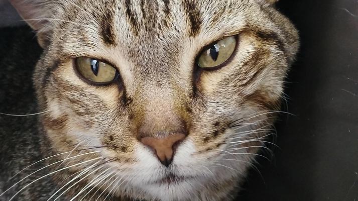 caso clínico felino