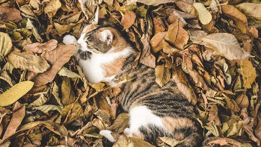 Cuidados de mascotas en otoño