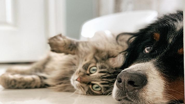 Salud preventiva en perros y gatos