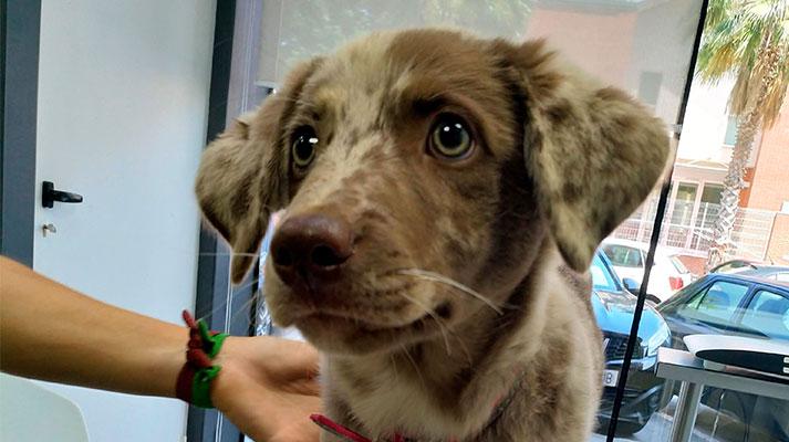 Primera visita al veterinario