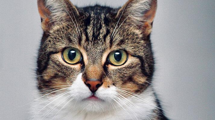 Procedimientos odontológicos para perros y gatos
