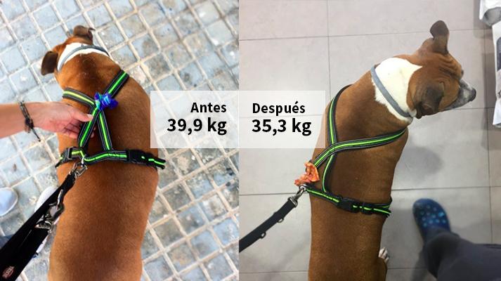 Sobrepeso en perros